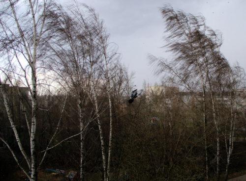 В Тверской области ожидается усиление ветра