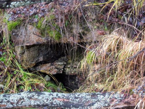 Липино: под сенью старых лип