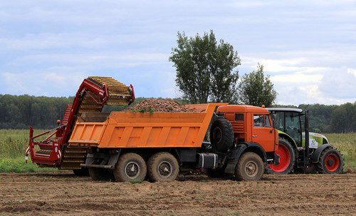 В хозяйствах района приступили к вспашке зяби и уборке картофеля